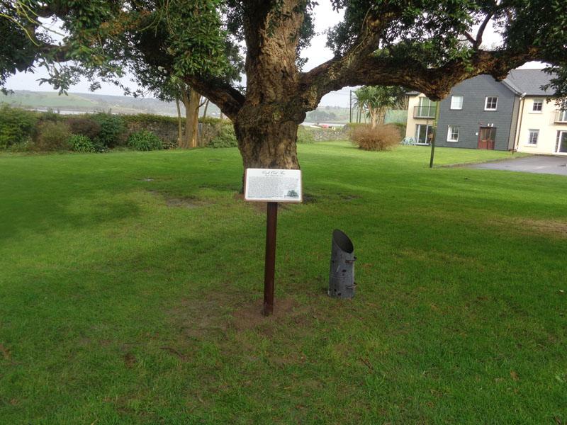Cork Oak Tree Exterior Plaque